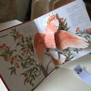 The Animal Parade. Pop-up book