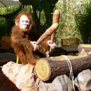 Drum playing monkey automaton