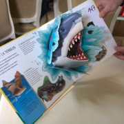 Animals Extreme. Pop-up book